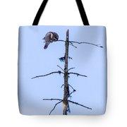 Hawk Owl Tote Bag