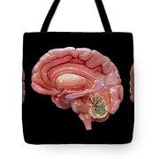 3d Rendering Of Human Brain Tote Bag