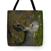 3x3 Buck Mule Deer-signed-#9716 Tote Bag