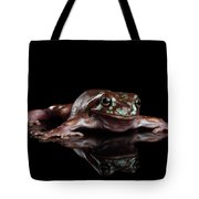 Australian Green Tree Frog, Or Litoria Caerulea Isolated Black Background Tote Bag