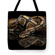 Ball Or Royal Python Snake On Isolated Black Background Tote Bag