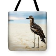 Bush Stone-curlew Resting On The Beach. Tote Bag