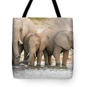Elephants At The Bank Of Chobe River In Botswana Tote Bag
