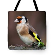 European Goldfinch Bird Close Up   Tote Bag
