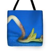 Germinating Marijuana Seed, Cannabis Tote Bag