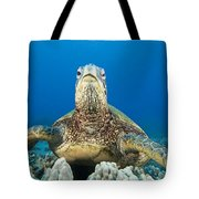 Hawaii, Green Sea Turtle Tote Bag