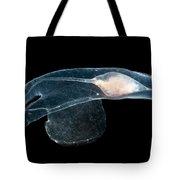 Heteropod Mollusk Tote Bag