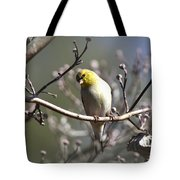 Img_0001 - American Goldfinch Tote Bag