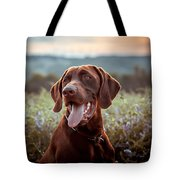 German Shorthaired Pointer Tote Bag