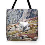 Mountain Goats On Mount Bierstadt In The Arapahoe National Fores Tote Bag