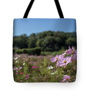 Sensation Cosmos Bipinnatus Fully Bloomed Colorful Cosmos On M Tote Bag