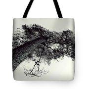 Trees And Sky Tote Bag