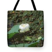White Lotus Flower Flower Lotus Nature Summer Green Plant Blossom Asian Tote Bag