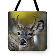 White Tailed Deer Smithtown New York Tote Bag