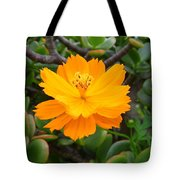 Australia - Cosmos Carpet Yellow Flower Tote Bag