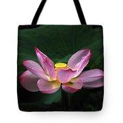 Blossoming Lotus Flower Closeup Tote Bag