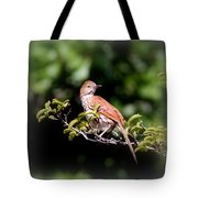 4979 - Brown Thrasher Tote Bag