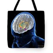 Anatomy Of The Brain Tote Bag