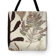 Aquatic Animals - Seafood - Algae - Seaplants - Coral Tote Bag