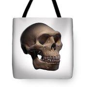 Homo Erectus Skull Tote Bag