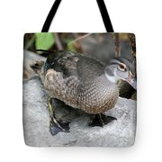 Juvenile Male Wood Duck Tote Bag
