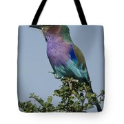 Lilac-breasted Roller Tote Bag