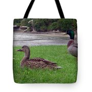 New Zealand - Mallard Ducks On The Grass Tote Bag