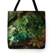 Parrot Fish Tote Bag