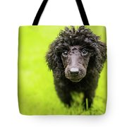 Poodle Puppy Tote Bag
