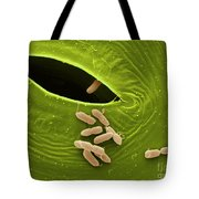 Sem Of E. Coli Bacteria On Lettuce Tote Bag