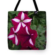 Sounds Of Summer  Tote Bag
