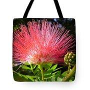 Australia - Caliandra Red Flower Tote Bag