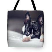 Boston Terrier Puppy Tote Bag