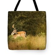 Fallow Deer Tote Bag