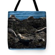 Clear Day Barn Tote Bag