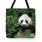 Giant Panda Ailuropoda Melanoleuca Tote Bag by Cyril Ruoso