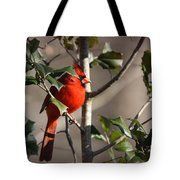 Img_0001 - Northern Cardinal Tote Bag