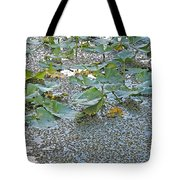 6 Mile Swamp Tote Bag