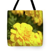 Tagetes Patula Fully Bloomed French Marigold At Garden In Octob Tote Bag