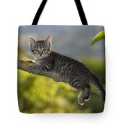 Kitten In A Tree Tote Bag
