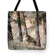 Mule Deer In The Pike National Forest Of Colorado Tote Bag