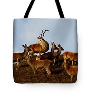Red Deer In The Highlands Tote Bag
