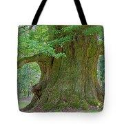800 Years Old Oak Tree Tote Bag by Heiko Koehrer-Wagner