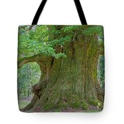 800 Years Old Oak Tree  Tote Bag by Heiko Koehrer-Wagner