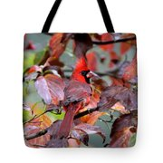 8624-001 - Northern Cardinal Tote Bag