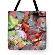 8627-001 - Northern Cardinal Tote Bag
