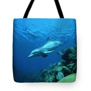 Bottlenose Dolphin Tursiops Truncatus Tote Bag
