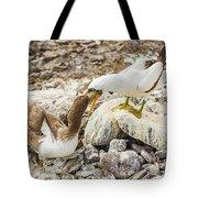 Nazca Booby In Galapagos Tote Bag
