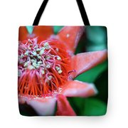 Royal Botanical Garden Of Madrid Tote Bag