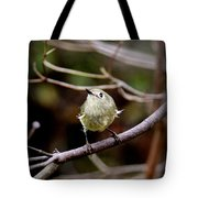 9343-00-ruby-crowned Kinglet Tote Bag